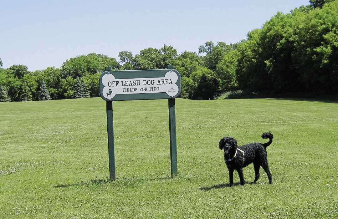 Coun. Janice Lukes says the popular Fields for Fido in Fort Richmond's King's Park will remain regardless of any other changes to the park.