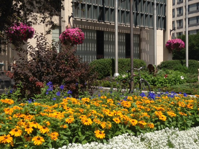 City Hall Flowers