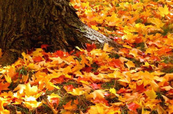 autumn-leaves-tree-trunk-4625