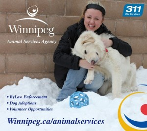 animal services agency