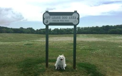 """""""Fields for Fido"""" at King's Park – Open House"""