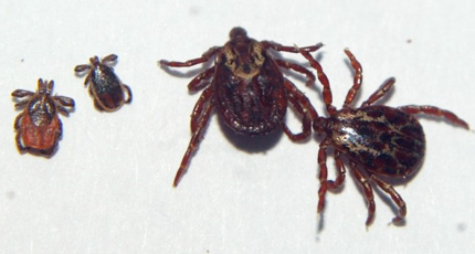 Tick Awareness Month – Stay Safe This Summer