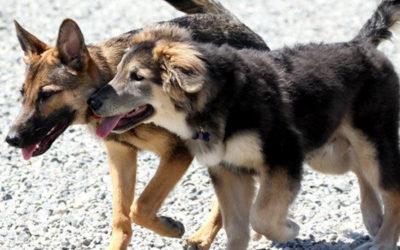 Help Shape Winnipeg's Master Plan for Off-Leash Dog Areas