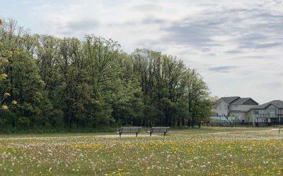 Provincial Pesticide Legislation – Dandelions & More!