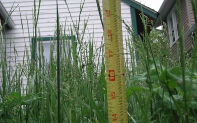 NEW Enforcement Process for HEIGHT of Long Grass and Weeds (2019)