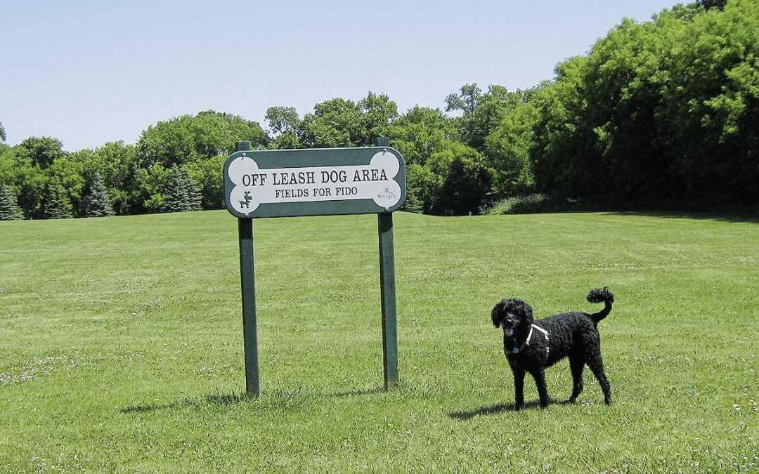 Improvements to King's and Kirkbridge parks being considered