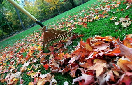 Curbside Leaf and Yard Waste Collection Program