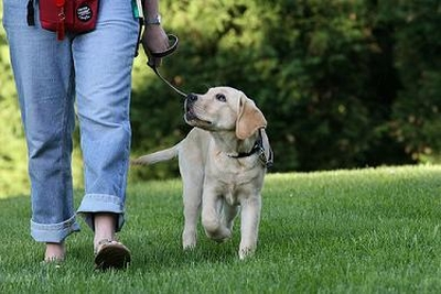 Dogs, Parks, and the Responsible Pet Ownership By-Law