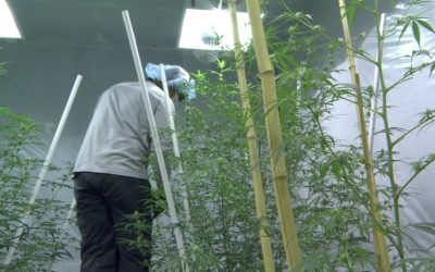 Residential Cultivation of Cannabis