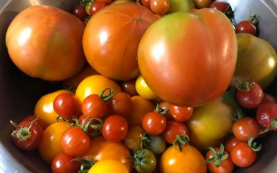 Sign up now for Community Garden Plots – 2021